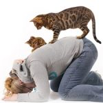 Jak zredukovat zvířecí alergeny uvnitř domu či bytu?