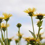 Jaké bylinky pomohou na žaludeční nevolnost?