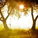 Alkohol a slunce – to nejde dohromady