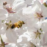 Bodnutí hmyzem – co dělat po bodnutí?