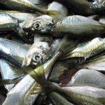 Rybí olej (rybí tuk) je super zdroj omega 3 mastných kyselin i vitamínu D
