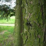 Kůra ze stromů a keřů pomůže vašemu zdraví.. Nevěříte? Čtěte..