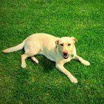 Canisterapie – když psí láska léčí