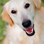 Léčba zvířaty, aneb když zvířata léčí – animoterapie