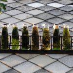 Bylinkové sirupy a jejich výroba – jsou zdravé!
