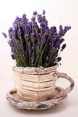 Levandulový olej nejen krásně voní, ale je vhodný i pro naše tělo...