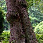 Léčivá síla stromů – stromy a zdraví – na co který strom pomůže?
