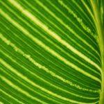 Chlorofyl a zdraví – zelená znamená život