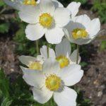 Homeopatika a hubnutí – jde to?