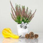 Pokojové rostliny a zdraví – tyto perfektně pročistí vzduch v domácnosti