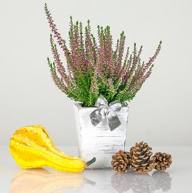 Jaké pokojové rostliny jsou super pro zdraví?