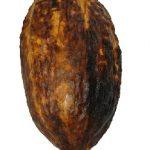 Kakaové boby a zdraví – plné vitamínů a minerálů