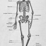 Zajímavosti o lidském těle – budete zírat!