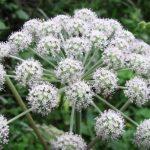 Jedovaté rostliny – pozor na ně