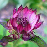 Bachova květová terapie: Tajemná energie květových esencí dokáže zharmonizovat tělo, mysl i duši
