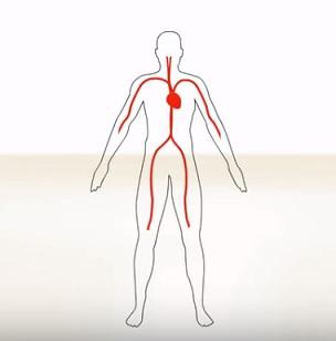 Srdeční arytmie a bylinky
