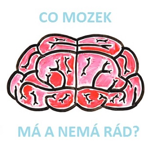 mozek-rad