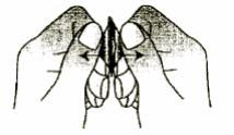 mirtazapin-orion-4