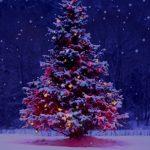 Jak na vánoční stres? Víme co dělat a nedělat…