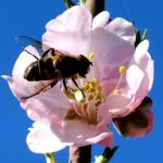 Jarní detoxikace organismu – jak na ni?