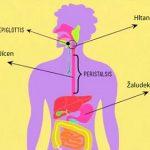 Jak zlepšit své trávení? Vše začíná u jídla