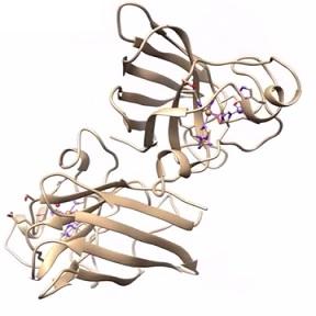 Enzym Superoxid dismutáza - silný antioxidant, chrání naše tělo