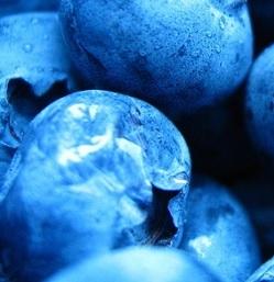 Borůvky a jejich účinky na naše tělo