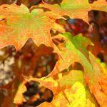 Podzim se blíží. Jak být zdraví i v tomto sychravém období?