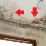 Plíseň v domácnosti (v bytě, v domě) a zdravotní problémy, které může způsobit – pozor na ni