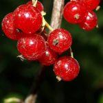 11 druhů ovoce s nízkým obsahem cukru – jsou to tyto dobroty!