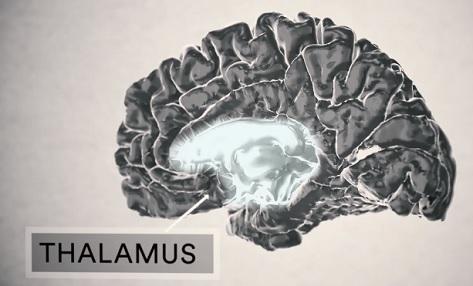 Co způsobuje esenciální třes? Odpověď na tuto otázku je stále poněkud nejasná. Vědci ale určili určitou část mozku, která, jak se zdá, je spojena s těmito třesy. Je to struktura hluboko v mozku nazývaná thalamus, která je zodpovědná za koordinaci a kontrolu svalové aktivity.