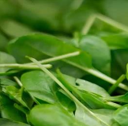 Vitamín K1 se nachází v rostlinách.