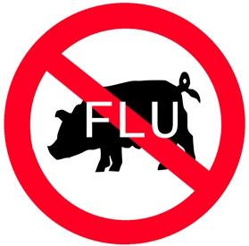 Prasečí chřipka - 10 věcí, které se vyplatí vědět