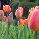 Jarní očista těla – jak na ni?