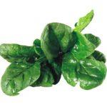 Špenát – jedna z nejvýživnějších potravin
