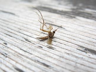 Choroby, které přenáší komáři