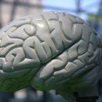 Vědci zjistili, jak bojovat proti odumírání mozkových buněk