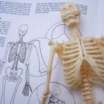 Slinivka břišní – její funkce a vše o ní