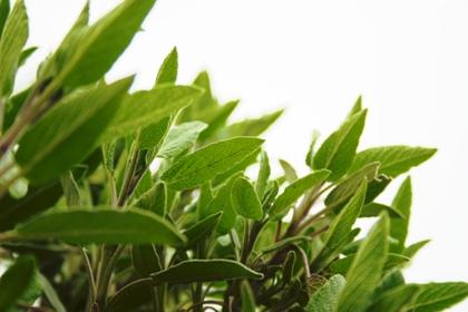 Lékaři v květináčích - bylinky pro Vaše zdraví