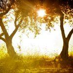 Vitamín D – sluneční vitamín – jeho zdroje, co se děje při nadbytku nebo nedostatku?