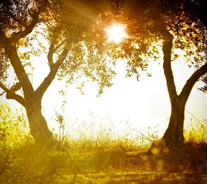 Vitamín D - sluneční vitamín