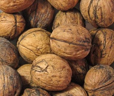 Vlašské ořechy a zdraví