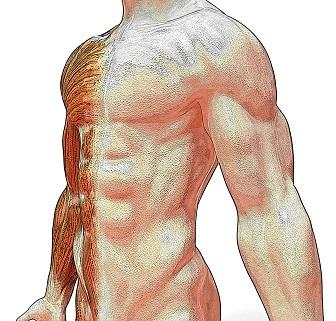 Znáte jednotlivé svaly břicha? A víte, jak je posilovat?