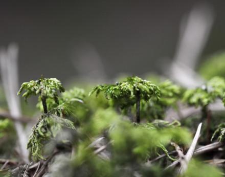 Domácí bylinky, které se vyplatí pěstovat