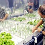 Hydroponická zelenina v obchodech: Je mrkev pěstovaná na vodě zdravější?
