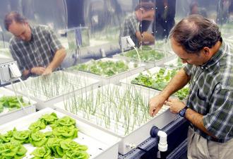 Hydroponická zelenina v obchodech