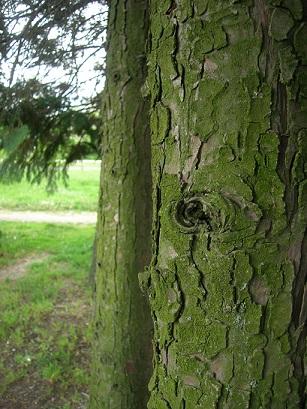 Kůra ze stromů a keřů pomůže vašemu zdraví. Nevěříte? Čtěte!