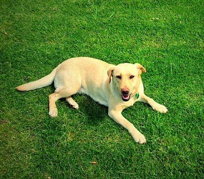 Canisterapie - psi umí léčit
