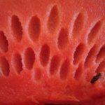 Meloun na hubnutí i dietu – melounová dieta