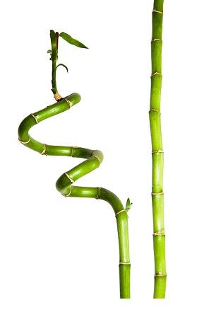 Bambus je symbolem zdraví a síly, Bambusová masáž - zkusíte ji?